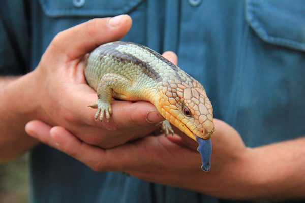 Gallery Reptile Roadshow Parties And Events