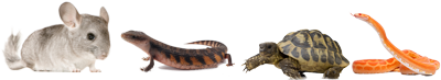 group-of-reptiles